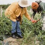 À combien s'élèvent les frais de notaire pour l'achat d'un terrain agricole ?